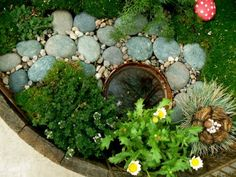 When your plants are in their place, set in your pond. Your pond can be any smaller container. We used a coconut shell but you can use a glass bowl, a porcelain bowl, a metal bowl... anything that lends itself to the magic and natural feel of your garden. Do not place your stones until you have planted the moss.