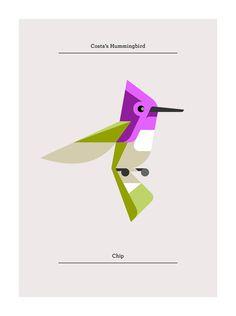 Costa's Hummingbird   Josh Brill