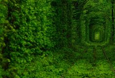 "This beautiful train track is naturally covered by green trees and makes a tunnel. Located in Kleven, Ukraine, this train tunnel is named as"" ""Tunnel of Love"" by local people. These incredible photos were taken by Oleg Gordienko."