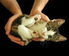 """It's dangerous to go alone! Take this!""  Photo via Animalamici"