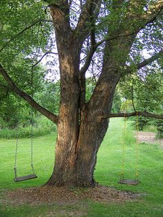 Swings for our trees.