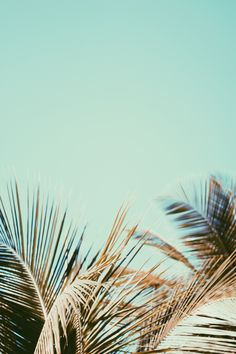 Palms | Summer Love