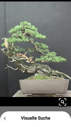 Bonsai Styles, Garden Ideas, Hacks, Photography, Pine, Cute Ideas, Landscaping Ideas, Backyard Ideas, Photograph
