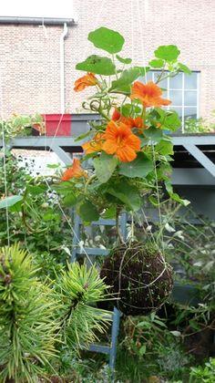Japanese String Garden | Garden ideas and how to / Awesome Idea.. Japanese String Gardens