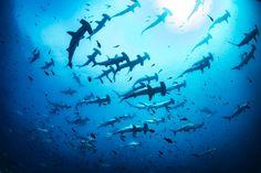 DIVE THE WORLD: CROCIERA SUBACQUEA A COCOS ISLAND - ORGANIZA CRUIS...