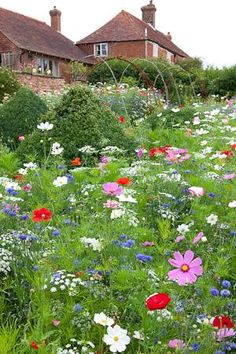 Pictorial Meadows - Pastel Annual Mix from Sarah Raven. 'Sets of flowers developed by Nigel Dunnett of Sheffield University' Olympic meadow man?