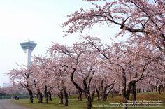 Goryokaku Park | Hakodate | Japan Travel Guide - Japan Hoppers