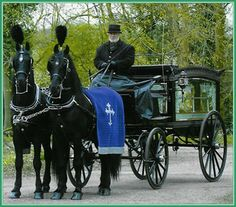 2 Black Horses Draped in Blue Pulling a Four Column Funeral Carriage (Horse Drawn Hearses).