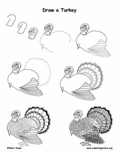 Drawing turkeys
