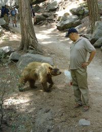 DON'T let this happen, NEVER let a bear approach you. This link is Yosemite's advice on what to do if you see a bear.