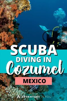diving in Cozumel   Planning a trip to Cozumel Mexico? Click here to find out what sites to dive, which school to go with, and more. #scubadiving #mexico #cozumelo Cozumel Mexico, Mexico Resorts, Cancun, Cozumel Scuba Diving, Nurse Shark, School Site, Mexico Food, Mexico Culture, Visit Mexico