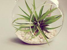 Air plan glass globe adds a perfect air of freshness for an outdoor or beach wedding centerpiece. #wedding