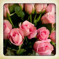 favorite flowers <3