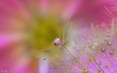 Autumn pearls by Miki Asai on 500px