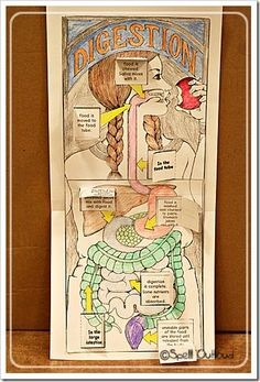 Human Anatomy: The Digestive System - Spell Out Loud - body art Science Classroom, Teaching Science, Science For Kids, Science Activities, Science Projects, Life Science, Science And Nature, Science Toys, Nutrition Activities
