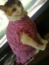 roupa de tricô e crochê de frio para cães e gatos - Pesquisa Google
