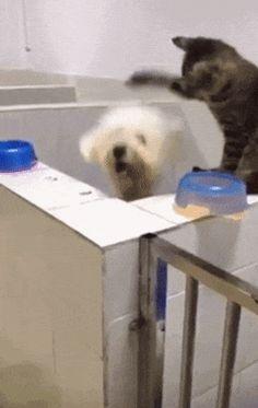 Gifs de Cachorros - Gato jogando basquete com cachorro