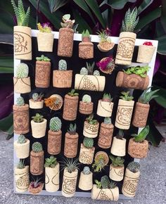 Shop online for all your Cactus and Succulent must haves.Very creative succulent wall🤗 Your next DIY project?How to Water Succulents – the Right Way - The Plant World Succulent Wall, Succulent Gardening, Cacti And Succulents, Planting Succulents, Propagate Succulents, Wine Cork Crafts, Cactus Y Suculentas, Hanging Plants, Plant Decor