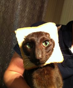 oh my goodness...there really are pix of cats with bread on their head.  Google it.