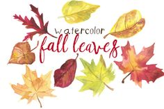 Check out Watercolor Fall Leaves by Digital Press Creation on Creative Market