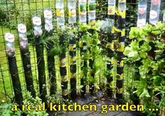 What a great way to recycle soda bottles to make a hydroponic tower for your herbs and veggies! Watch the instructional video at:   http://www.youtube.com/watch…