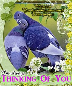 Share with your sweetheart this nice and cute thinking of you ecard. Free online A Nice And Cute Thinking Of You Card ecards on Everyday Cards Always Thinking Of You, Virgo, Your Cards, Ecards, Husband, Nice, Always On My Mind, Virgos, Libra