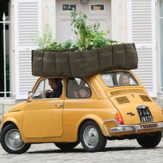 Fiat 500 with a rooftop garden Unique Gardens, Small Gardens, Amazing Gardens, Vertical Gardens, Diy Jardin, Veg Patch, Square Foot Gardening, Parks, Raised Garden Beds