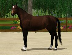 Sims 3 Horses for Sale | there will be tori horses for sale in the future
