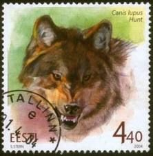Estonian grey wolf unfortunately the wolf is still huntedWe genotyped 16 microsatellite loci in 166 individuals sampled from the wolf population in Estonia and Latvia that has been under strong and continuous hunting pressure for decades. Our analysis demonstrated that this relatively small wolf population is represented by four genetic groups