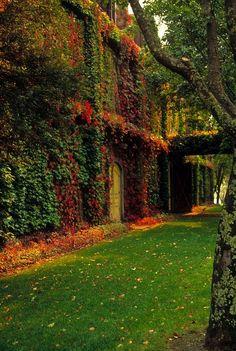 Beautiful Ivy Wall via pinterest