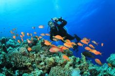ANDAMAN UNDERWATER SAFARI, Online Andaman in category Travel and Recreation. Located in Port Blair, Andaman and Nicobar Islands, India