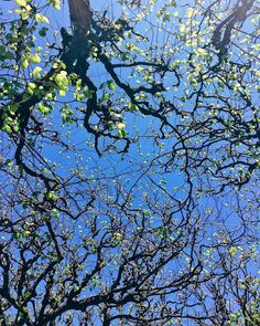 #instapic #instadaily #picoftheday #springday #sweden #swedinbloom #spring #cityrambler #trees #wanderlust