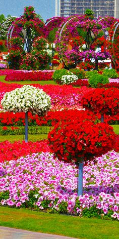 10 Things To Do In Dubai Dubai Miracle Garden! Top 10 Things to do in Dubai! Top 10 Things to do in Dubai! Beautiful Nature Pictures, Beautiful Flowers Wallpapers, Beautiful Nature Wallpaper, Beautiful Flowers Garden, Amazing Flowers, Beautiful Roses, Pretty Flowers, Beautiful Landscapes, Trees With Flowers