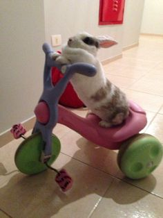 Hilarious bunny! @Dawn Cameron-Hollyer Cameron-Hollyer Marie for when the bunny mobile is in the shop.
