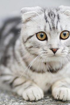 White and Black Cat