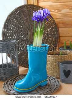 maybe some shallots.  Growing of spring flowers (irises and tulips) in pots on a balcony in expectant of spring