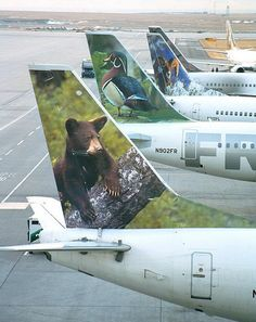 Frontier Airlines 737-300. Flew this same 733 pictured (with the Bear tail) DFW-DEN back in August 2004.