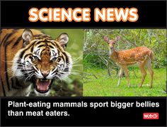 Science News, Mammals