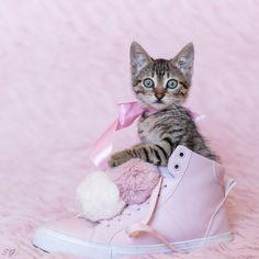 Pisicuta Candy este fan ghete H&M. / Candy kitty is H&M boots fan.