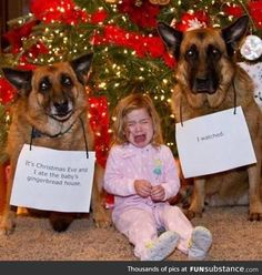 Dogs look innocent and so cute Dogs look innocent and so cute Funny Animal Jokes, Funny Dog Memes, Cute Funny Animals, Funny Animal Pictures, Animal Memes, Cute Baby Animals, Funny Dogs, Pictures Of Cute Dogs, Cat Shaming