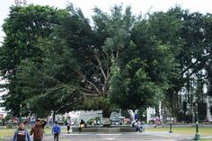 Far beneath the highland of Dieng, lies the pleasant city of Wonosobo. At the heart is the city square, where people can enjoy the breeze under a huge tree.