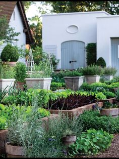 Veggie garden at Beechwood,South African jeweller, Christopher Greig's home. House and Leisure Jan 2014