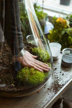 Urban Gardening-Best City Gardens In Chicago 2013.  Step. By step How to make terrarium