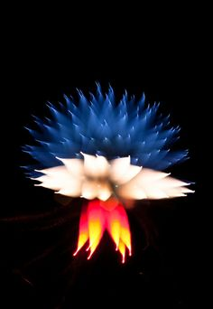 Unusual Long Exposure Firework Photographs by David Johnson. #firework #art #photography #color