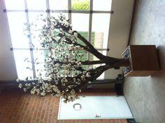 Magnoliaboom xl op echte houten stam! Xl, Plants, Products, Plant, Gadget, Planets