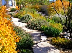 Waterwise Landscapes - traditional - landscape - albuquerque - Waterwise Landscapes Incorporated