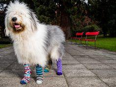 #DillyDogSocks colorful Socks, farbige Socken, bunte Socken