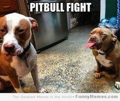 LOL that's a cute #pitbull fight #PitbullAwarenessMonth