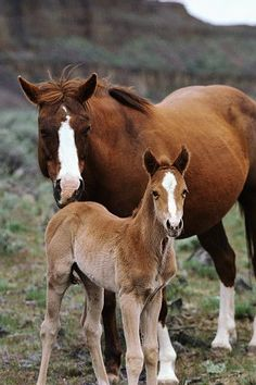 162 Best wild Horses Horses All Kinds images in 2013