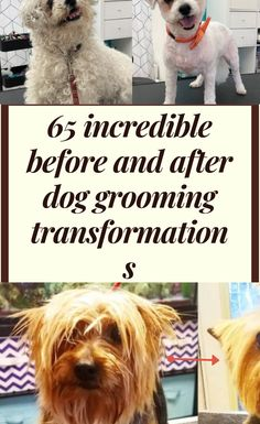 When summertime rolls around, dogs are itching to shed their winter coat and sport a fresh new look. Just like us, sometimes they love what they see, and other times their sour expression says it all.  65 #incredible #before #and #after #dog #grooming #transformations Hanging Picture Frames, Hanging Pictures, Asia Cup, Different Dogs, Model Airplanes, Dog Grooming, Smoothie Recipes, Halloween 2019, Happy Halloween
